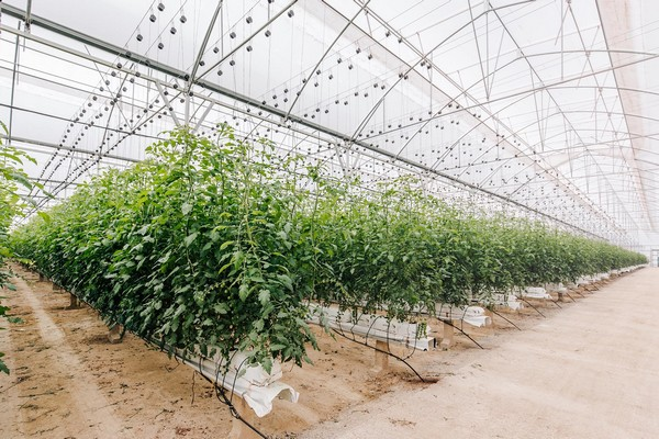 projar greenhouse