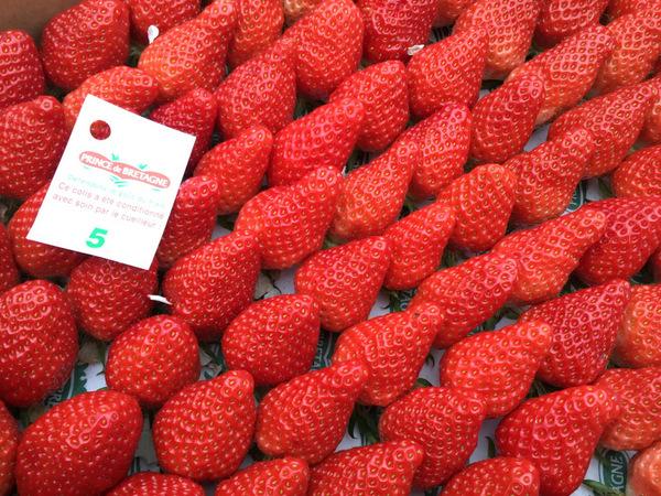 Strawberry Mara Des Bois Pp 8517 Fruit