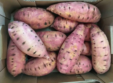 Italian Sweet Potatoes Have A Better Shelf Life And Quality