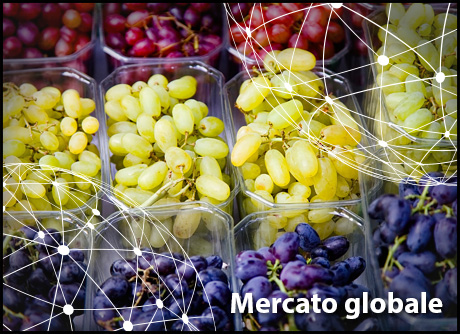 65aee771e3 Focus sul mercato mondiale dell'uva