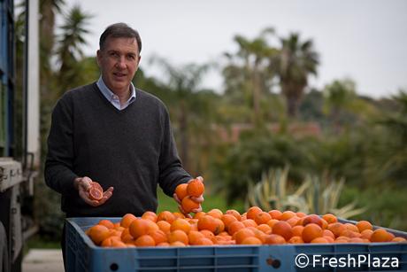Filiera agrumi siciliani: serve piu' trasparenza per garantirsi il mercato  nel 2020