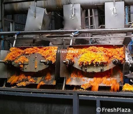 Lo scarto agrumicolo come risorsa energetica e agricola per l'industria del  succo d'arancia