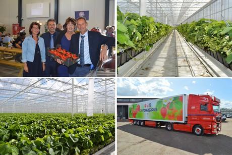 Netherlands: 20 hectare strawberry greenhouse opened