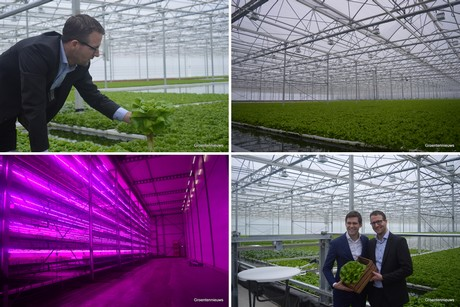 Hortidaily Global Greenhouse News