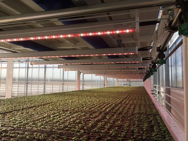vertical farming climate