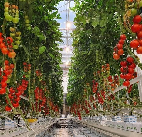 LED greenhouse lighting