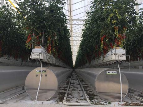 uae first tomatoes in store as suprimair greenhouse opens