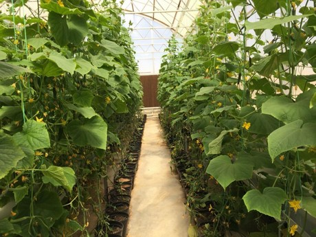 Wondrous To Grow Vegetables In The Desert Is A Reality Not A Dream Home Interior And Landscaping Oversignezvosmurscom