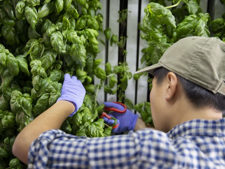Square Roots & Gordon Food Service partner to grow local food in