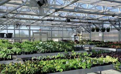 Greenhouse Operations Innovation Discovery Survey