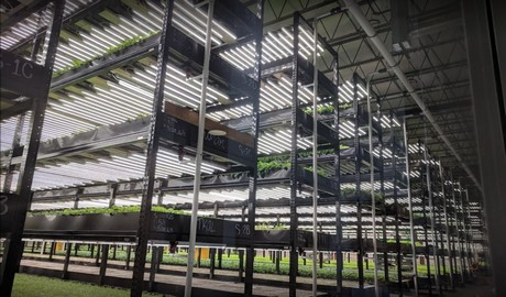 US (MN): 87,000 sq  ft  aquaponics farms closes