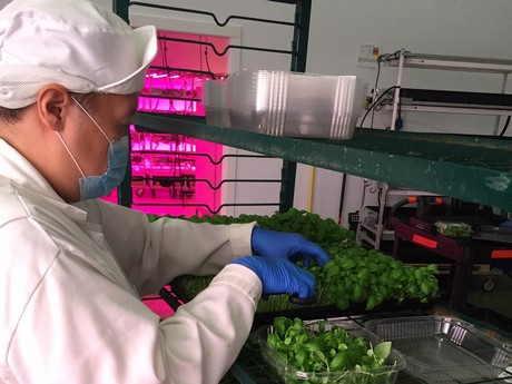 US (NC): Vertical farm in former factory site doubling in production capacity