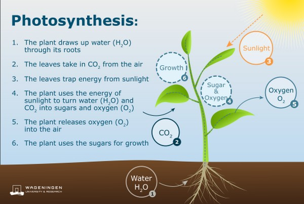 Faster Plant Growth Through More Efficient Photosynthesis Blinded by the light to explore student misconceptions about matter. faster plant growth through more