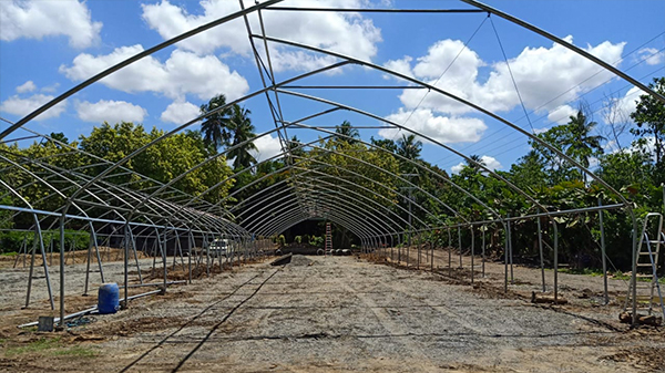 Hydroponic Growing In The Philippines With Greenhouse Kit