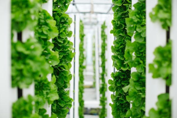 Bayer and Temasek team up to develop vegetable varieties for vertical farming