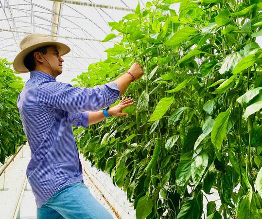 grower examining plants