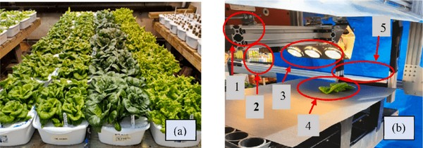 lettuce nutrients study