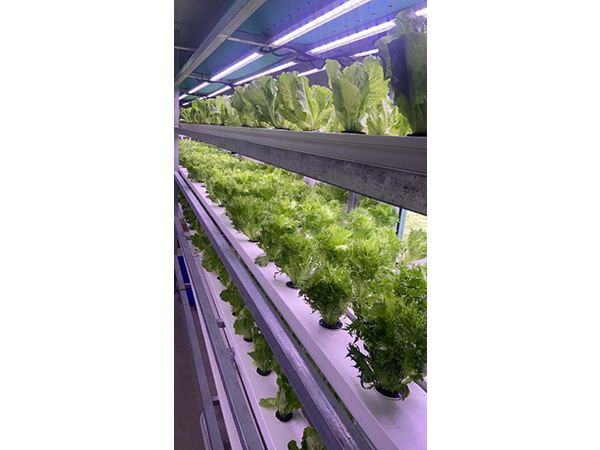Soiless Cultivation