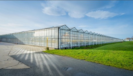 Greenhouse building