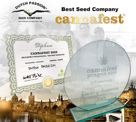 quite nice most popular exquisite style Dutch Passion awarded 'Best Seedbank' at Cannafest 2019