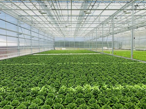 Edible Garden exceeds November sales during 2020 Thanksgiving season