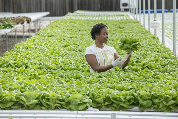 Buitenstaanders uit de sector actief in vertical farming