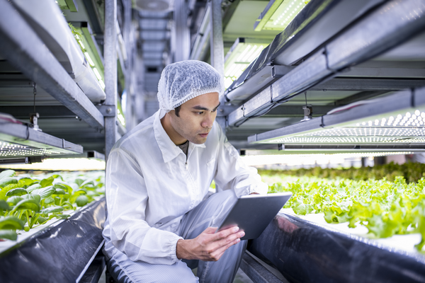 Energiebeheerbedrijf ziet kansen in automatisering indoorteelt